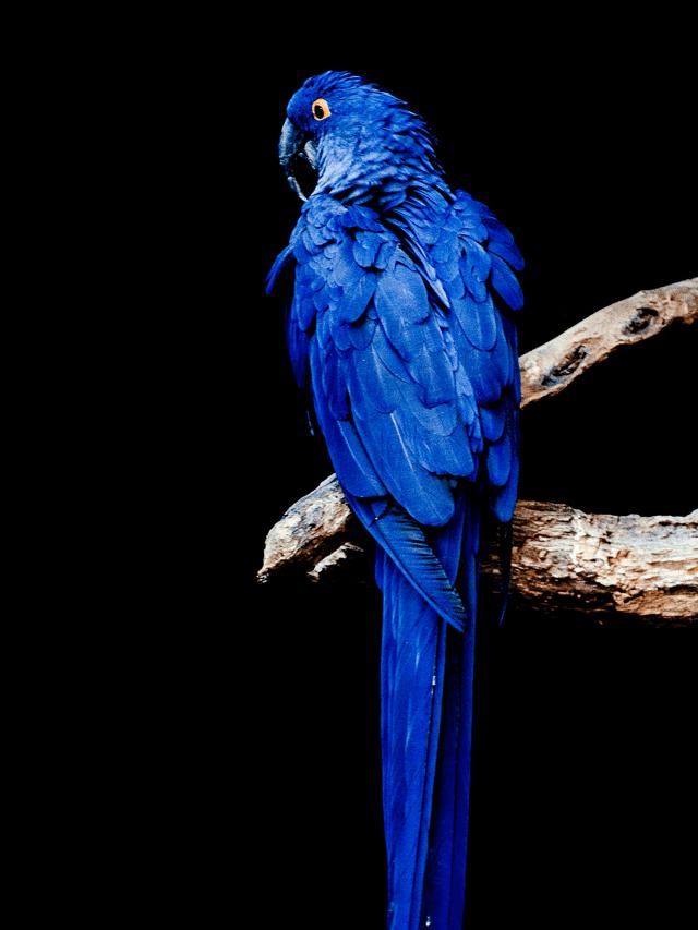 Parrot-15-1.png